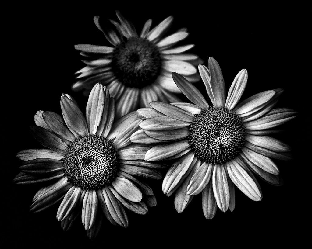 Black And White 12 Plugin