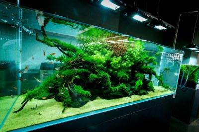 ADA Nature Aquarium Gallery | Beautiful moments of the ...
