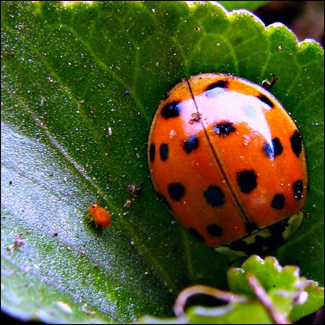 Ladybug And Baby Bug See The Baby Bug Better