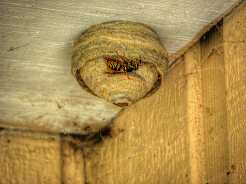 A Wasp Nest I Found This Active Wasp Nest Above Our