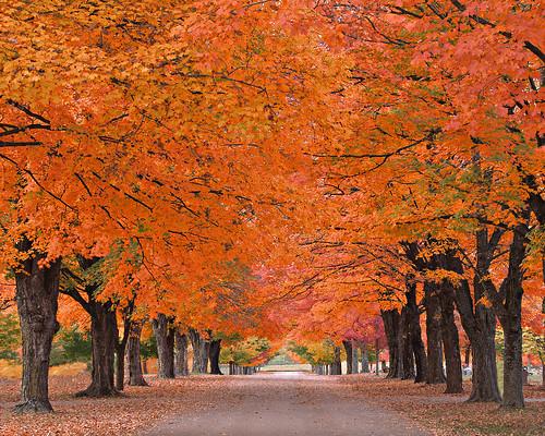 Fall Color Arkansas Map