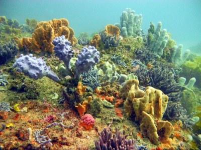 Sponge garden, Bare Island, Botany Bay | Real colours here ...