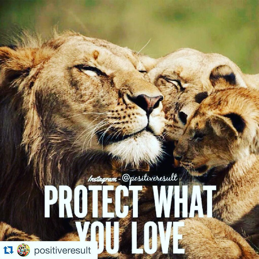 Quotes About Lions And Love