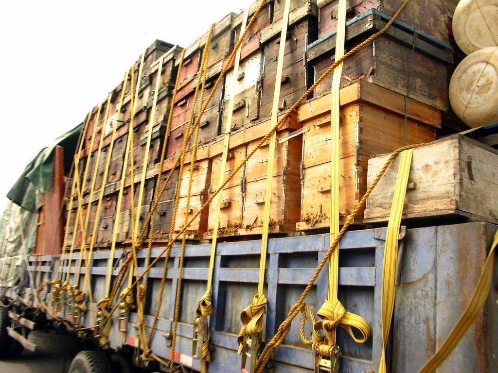 My Nemisis Bee Hive Transport Trucks Near Xixia Henan