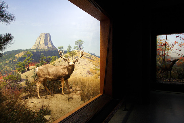 Diorama At The Museum Of Natural History New York Flickr
