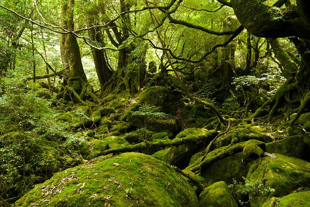 Princess Mononoke Forest | Yakushima Island's Forest of ...