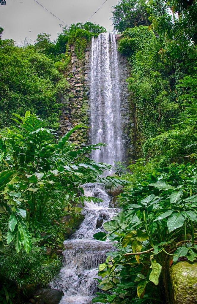 Waterfall Portrait Jurong Bird Park Singapore Jurong