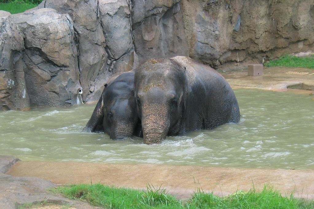 Shanthi And Kandula In Pool Photo Credit Smithsonian S