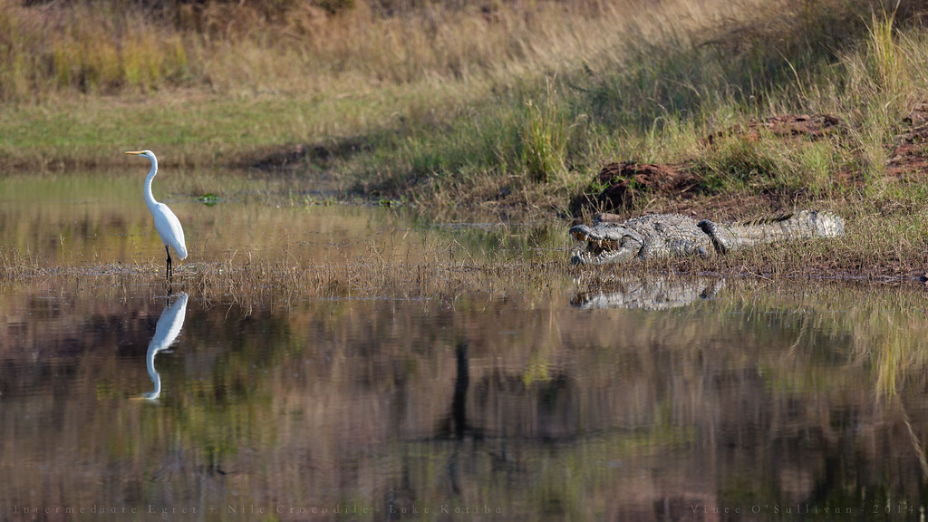 Map Range Nile Crocodile