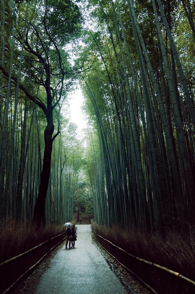 Sagano Bamboo Forest Arashiyama Japan Arashiyama 嵐山