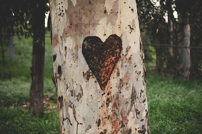 Carved Tree Heart Magic In Overlooked Places It S All