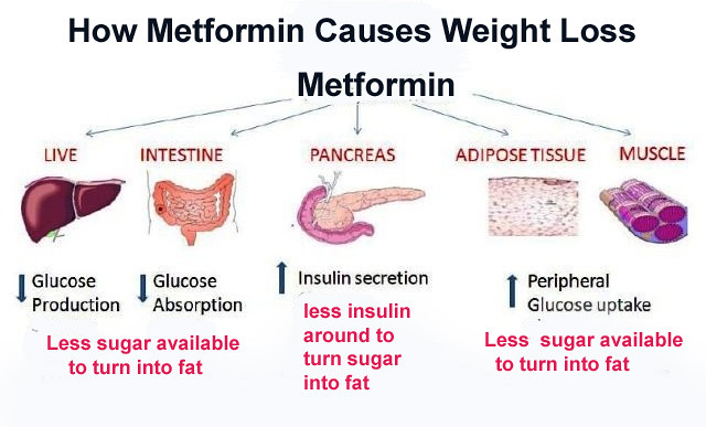 Metformin Xr 500mg Side Effects
