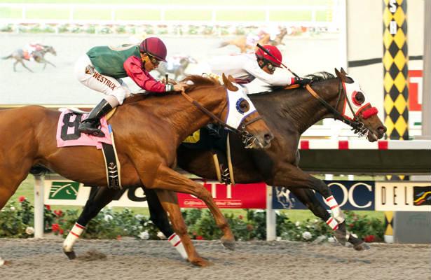 Big Macher Heads Strong Field In Palos Verdes Horse
