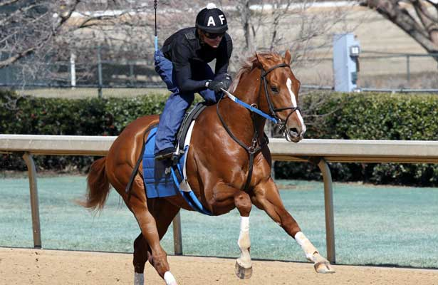 Tapiture Walt Prepare For Southwest Horse Racing Nation