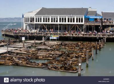 San Francisco, USA, sea lions at Pier 39, Fisherman's ...