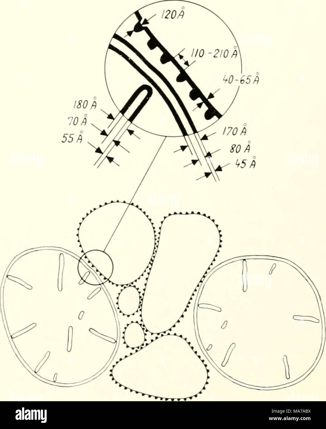Fein was ist schematisch bilder der schaltplan triangre info