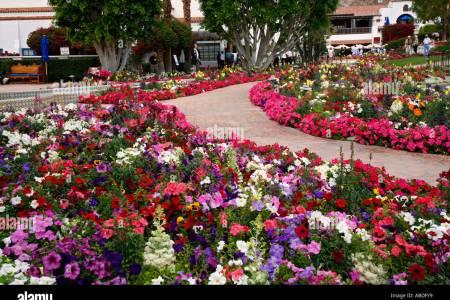 Flower shop near me desert flowers near palm springs flower shop flower shop desert flowers near palm springs mightylinksfo