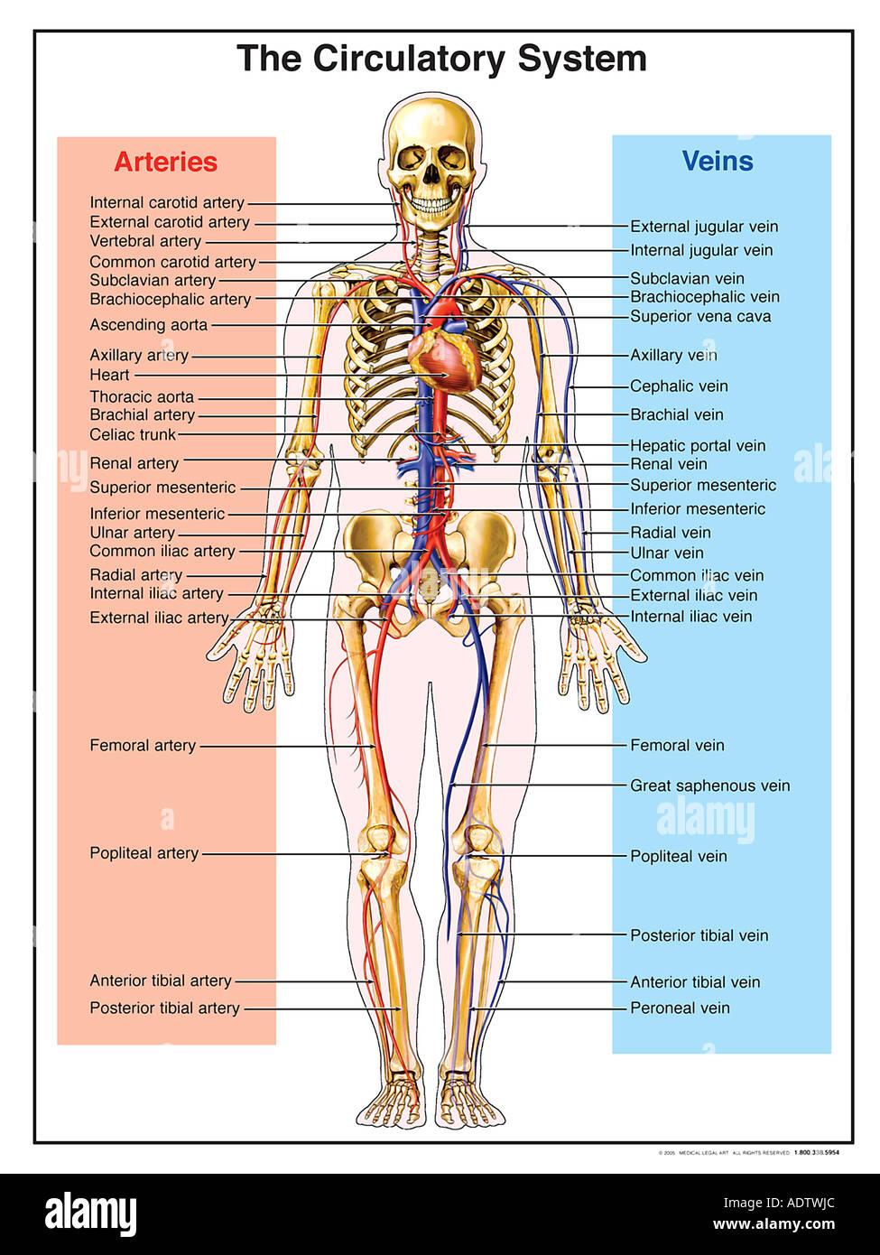 interior internal jugular vein anatomy » Full HD MAPS Locations ...