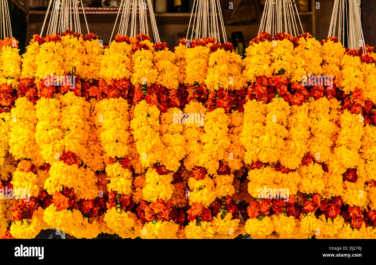 Marigold Flowers garlands for sale at Mapusa Market  Goa  India     Marigold Flowers garlands for sale at Mapusa Market  Goa  India