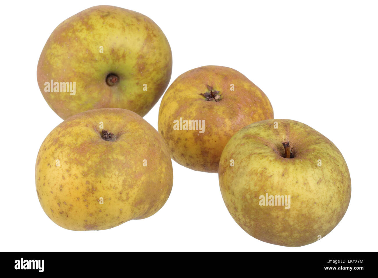 Apple variety Canada Reinette Stock Photo  81133800   Alamy Apple variety Canada Reinette