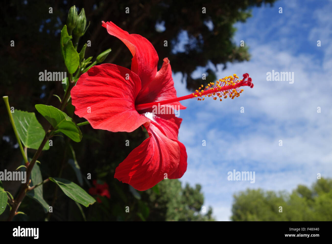 Name of red flower with yellow stamen mightylinksfo
