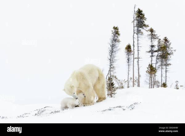 polar express cda pl # 72