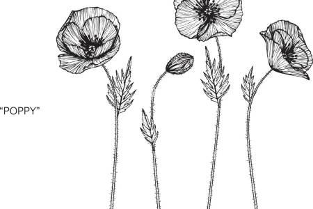 drawing of a poppy flower flower shop near me flower shop