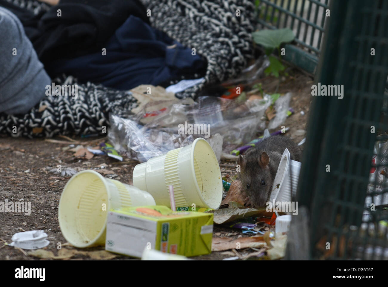 Migrants France Stock Photos   Migrants France Stock Images   Alamy August 14  2018   Paris  France  Rats are seen among rubbishes and abandoned