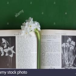 Gardening Bookmark Template Gardening Flower And Vegetables