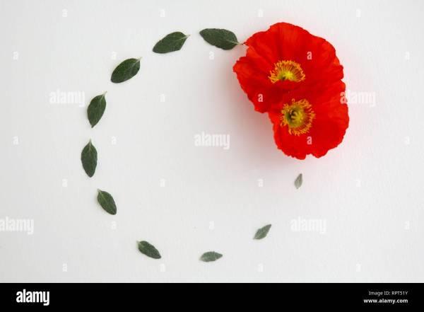 wreath template anzac day # 73