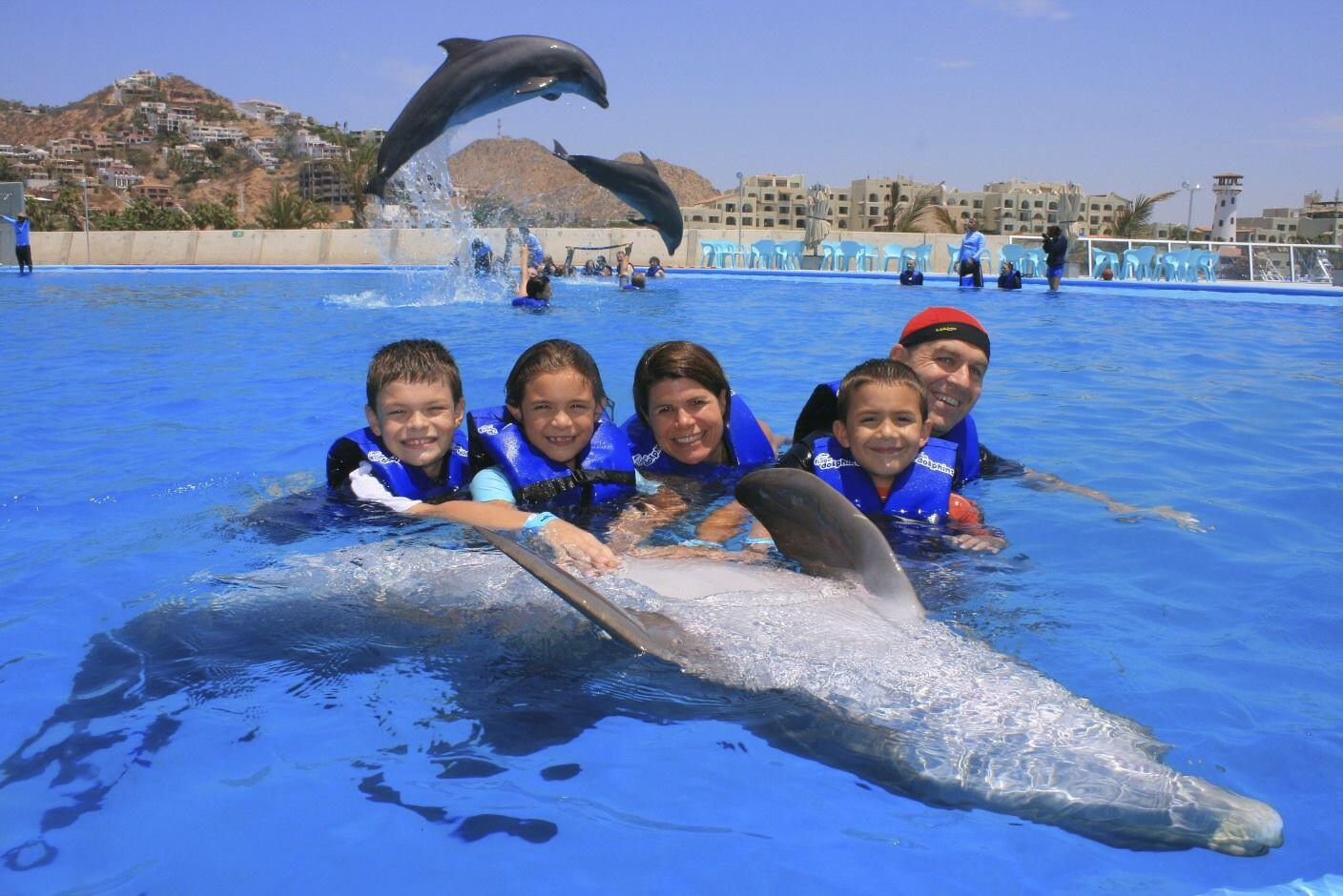 take the whole family to swim with the dolphins in Cabo San Lucas or San Jose del Cabo cabo activities