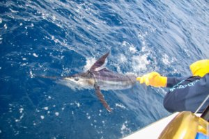 cabosanlucassportfishingcharter