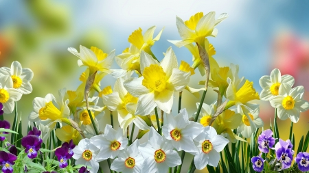 Spring and Easter Flowers   Flowers   Nature Background Wallpapers     Spring and Easter Flowers
