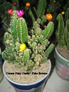 Cactus Flowers   Real or Fake  On line Guide to the positive     fake flowers on cactus