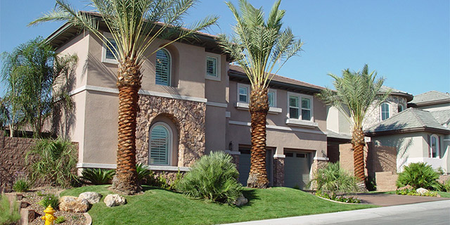 We Don T Plant Certain Trees In Las Vegas Landscaping