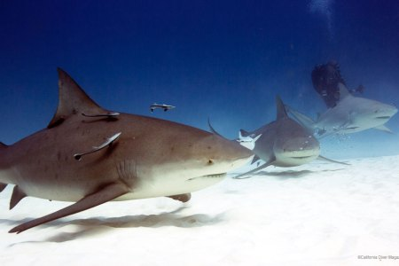 interior pics of sharks » [HD Images] Wallpaper For Downloads | Easy ...