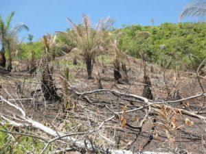 PMA MS desmatamento