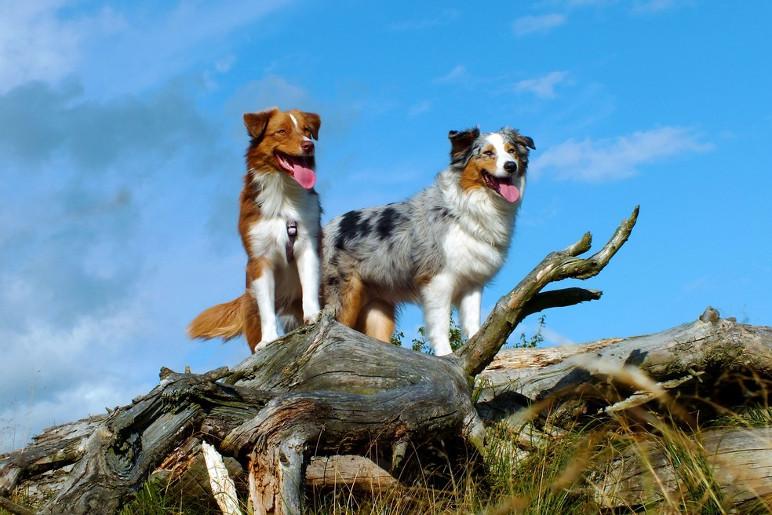 Cachorros são animais territorialistas e buscam defender seu espaço de desconhecidos (Foto: Divulgação)