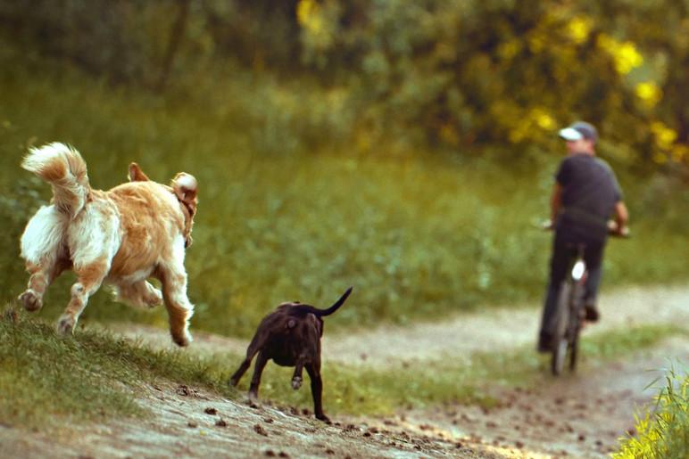 Por que cachorros correm atrás de carros, motos e bicicletas? (Foto: Divulgação)