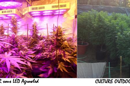 Indoor Skydiving » indoor culture cannabis | Indoor Skydiving