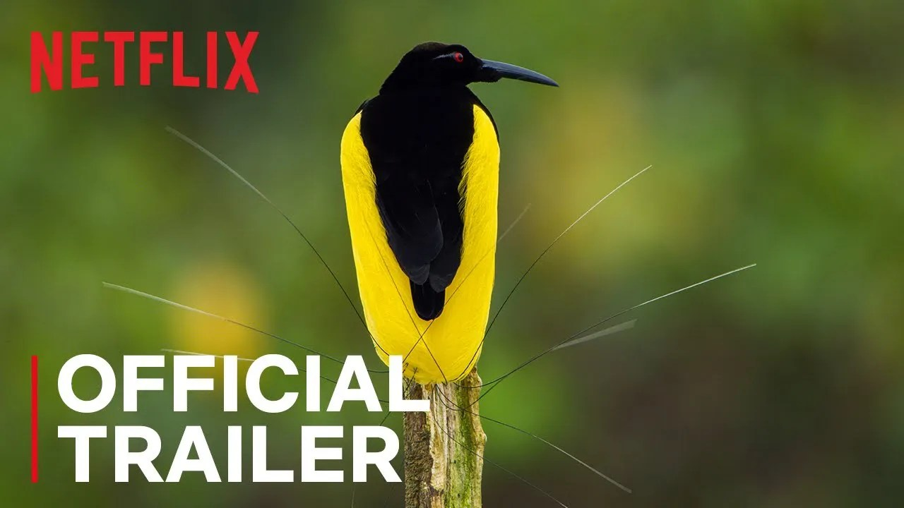 Dancing With The Birds | Trailer Oficial | Netflix