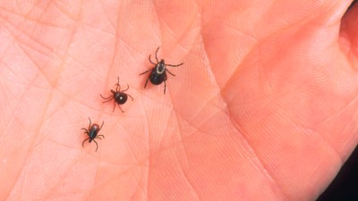 A tick bite can make you allergic to red meat - CBS News