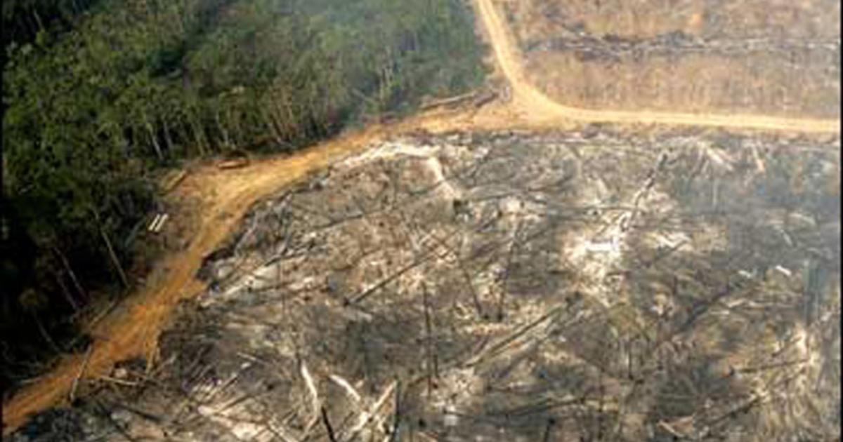 Amazon Deforestation Rainforest Rate