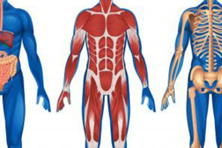 anatomy and physiology pictures » Path Decorations Pictures | Full ...