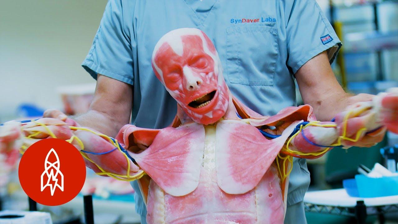 Westworld Irl Creating Lifelike Synthetic Human