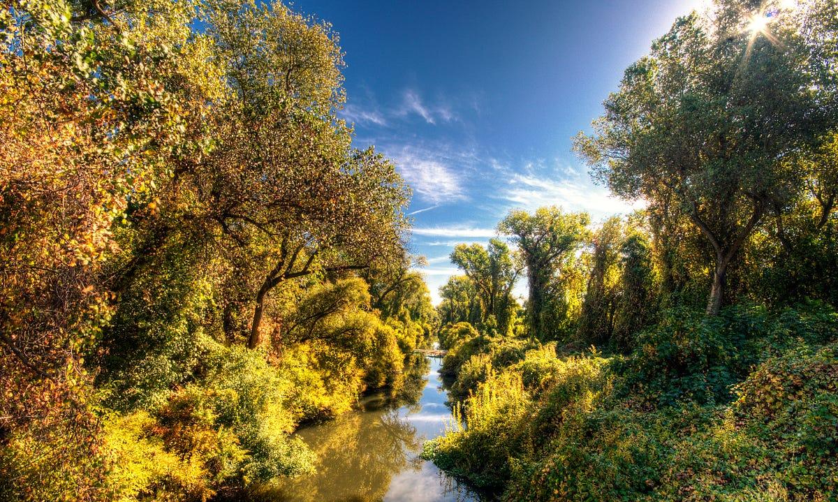 Sacramento California S City Of Trees The California Sun