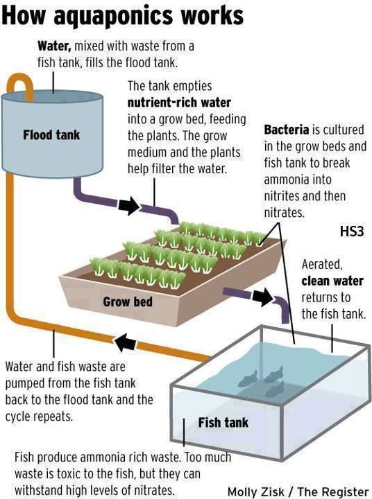 Aquaculture Pond Design