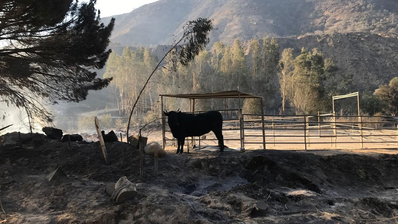 animal ranch - HD1600×900