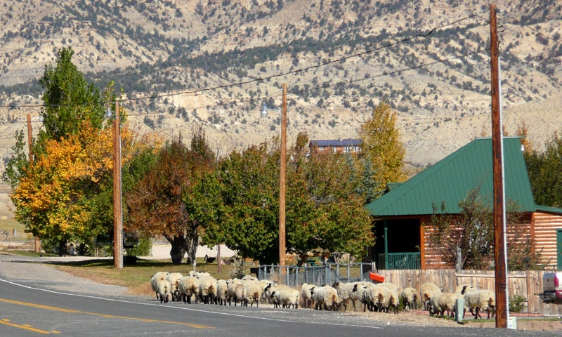 Motels Canyon Grand Near