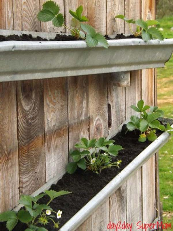 Wall Vegetable Planters